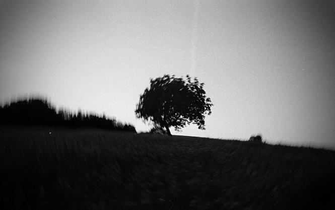 http://www.juliehauber.fr/files/gimgs/th-31_arbre blada été_v2.jpg